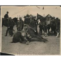 1919 Press Photo Sgt. Major Griffin and Trained Horse Honor Prince of Wales