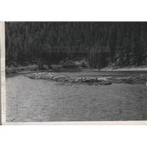 1950 Press Photo Lumber Industry-logs jammed on the riverside - spa90977