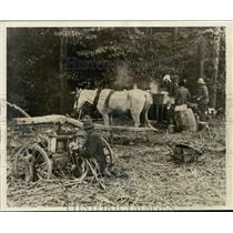 1929 Press Photo Grinding Sugar Cane and Making Syrup, Primitive Method
