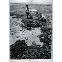 1972 Press Photo Australian Barrier Reef - RRX58853