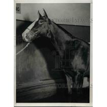 """1932 Press Photo """"Likely Joy"""", owned by Miss Jane Bancroft, National Horse Show"""