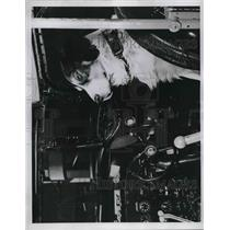 1946 Press Photo Bosco the dog in the cockpit, U. S. N. Air Transport