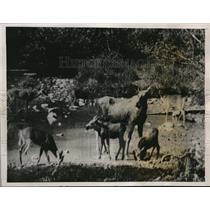 1923 Press Photo camerman for Adolph Zukor films Canadian wildlife for movie