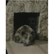 1917 Press Photo A bear in its zoo enclosure