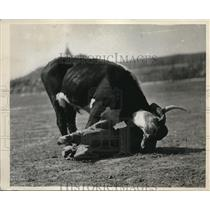 1930 Press Photo Cowboy guide at Glacier Natl Park bull dogging for tourists