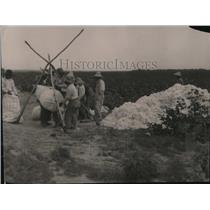 1919 Press Photo Weighing Cotton