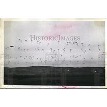 1942 Press Photo Lots of parachutists making a jump