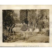 1929 Press Photo Garden of Gethsemane At Easter