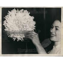 1952 Press Photo The National Dahlia Society's show at Horticultural Hall