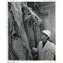 1971 Press Photo Dr Linda Carpenter Dwarfed By Beef Carcass In Slaughterhouse