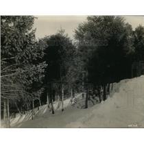 1927 Press Photo Pike National Forest winter scene in Colorado