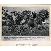 1962 Press Photo Camouflaged South Vietnam transport supplies via elephants