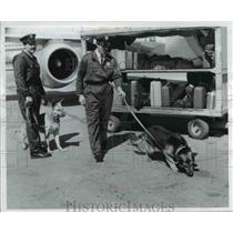1973 Press Photo Dogs used to sniff out bombs in aircraft - cva75906
