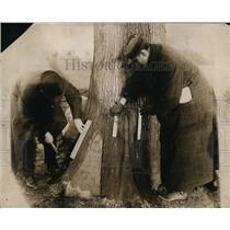 1912 Press Photo Healing on the Base of White Oak on Mirtwood Farm - ney02915