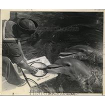 1940 Press Photo Porpoise Trained to Eat From A Plate  - ney02745