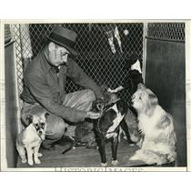 1938 Press Photo Glen Nelson Human Department Worker with 100 Stray Dogs in LA