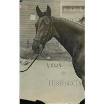 1918 Press Photo Racehorse Princess Etewah at a track for a workout - net05213