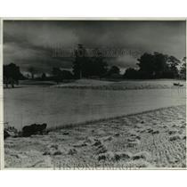 1938 Press Photo Farmer Harvests Barley in Deloraine, Tasmania - mja03962