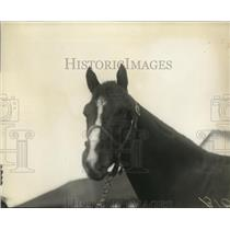 1921 Press Photo Racehorse Firebrand at a track stable area - net25496