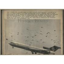 1975 Press Photo Birds surrounds airliner as it takeoff - RRR81555