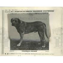 1901 Press Photo Bull Mastiff Dog owned by J.Morton W. Gibson - nef68879
