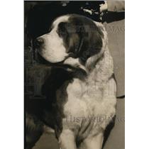 1922 Press Photo NEW YORK LARGEST DOG AT NEW YORK DOG SHOW NYC - neny21647