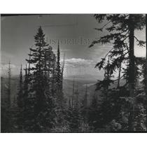 1951 Press Photo Evergreens w/ scene view from the Vista House of Spirit Lake
