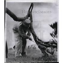 1960 Press Photo Singer MacRae Chipping Cypress Point - RRW98609