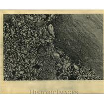 1995 Press Photo New Orleans - Dead Fish & Dead Algae on Bayou St. John