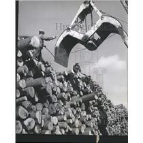Press Photo Kimberly-Clark Corp. Wood Stockpile - RRW47383