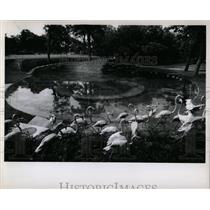 1955 Press Photo Dallas Chamber Commerce Texas Third La - RRY61197