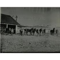1929 Press Photo San Juan Basin Fields scene Horse Weak - RRX79841