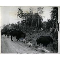 1962 Press Photo Elk Island National Park Alberta