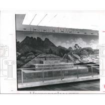 1964 Press Photo Wildlife display in Regan Building, Austin, Texas, no wildlife