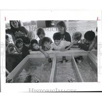 1987 Press Photo Arla Hart & Students at BMW Farms Waller County Observe Catfish