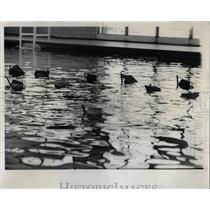 1968 Press Photo Members of Red Cross swimming class - RRW62117