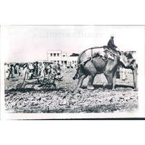 1956 Press Photo Lucknow India Elephant-Powered Plow - ner26413