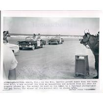1955 Press Photo Daytona Beach FL Mrs America Parade Watched by Cow - ner27099