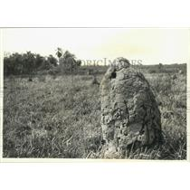 1991 Press Photo Termite mound in the Mbaracayu Preserve, Paraguay - mjb77267