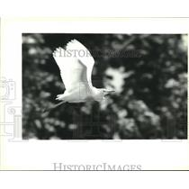 1995 Press Photo An egret flies over the rejuvenated marsh. - nob00459