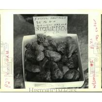 1993 Press Photo Johnny Leblanc displays 50 million year old fossil droppings.