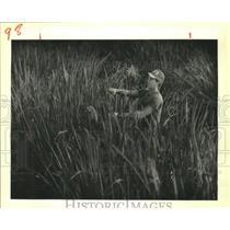 1988 Press Photo Greg Daigle Tends Marsh Plants at Louisiana Coastal Marshlands
