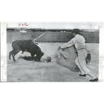 1955 Press Photo LaPlaya fighting bull mauls Patricia - RRQ20821