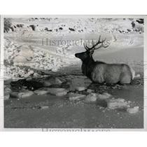 Press PhotoGrand Teton National Park elk Ice streams