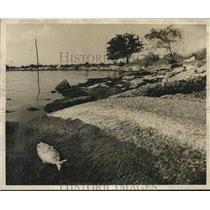 Press Photo Dead fish on the banks of Lake Pontchartrain. - nob54279