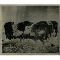 1952 Press Photo Weather Winter Fury Pierre Area - RRX52199