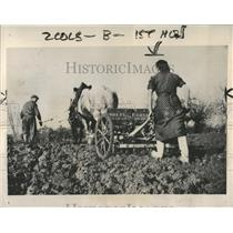 1941 Press Photo Woman farm couple taking sowing winter - RRX83047