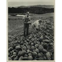 Press Photo James & Ernestine Swann picking gourds in field - abna43238