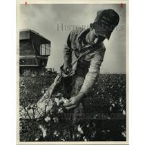 Press Photo Mike Bishop picking cotton near Wren, Lawrence County, Alabama