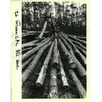 1989 Press Photo Cut Trees Resulting From Logging Operations In Forest